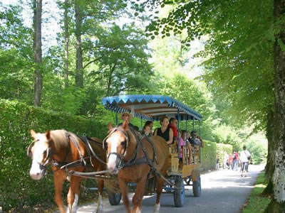 Carrozza e cavalli a Herrenchiemsee